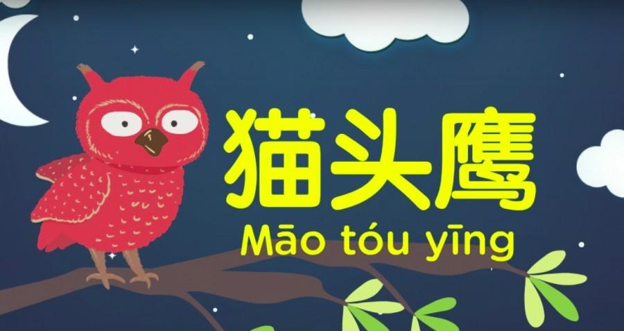 BB每週學習視頻|中英雙語動物歌曲